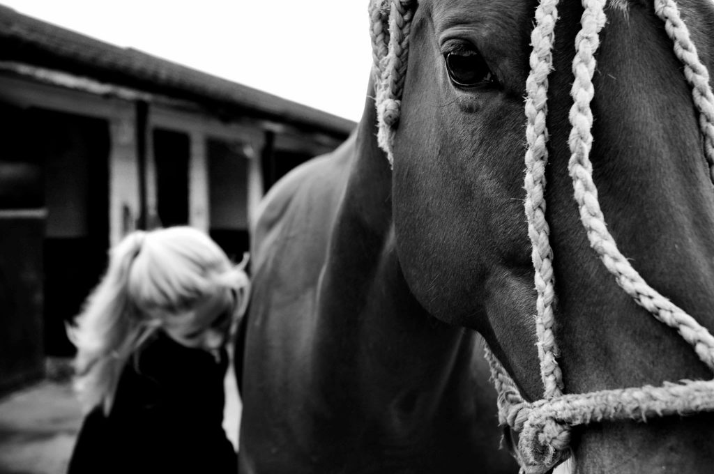 okl polo equestrian background