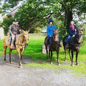 polo pony hacks okl equestrian